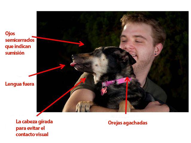 estres-canino-2