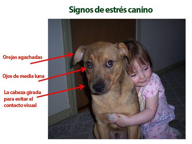 estres-canino