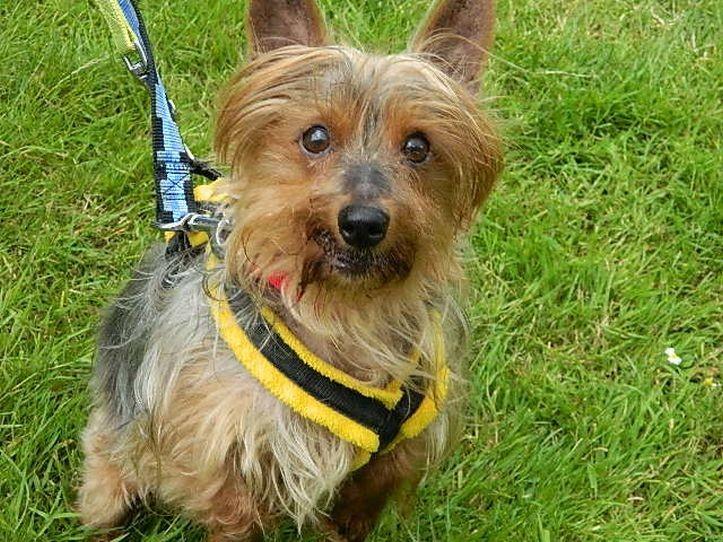 Bertie, foto de la RSPCA